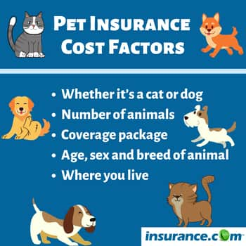 Pet Insurance Find The Best Pet Insurance Companies