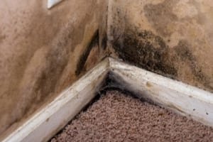 Is mold covered by homeowners insurance?