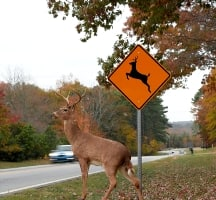 comprehensive insurance and deer collisions